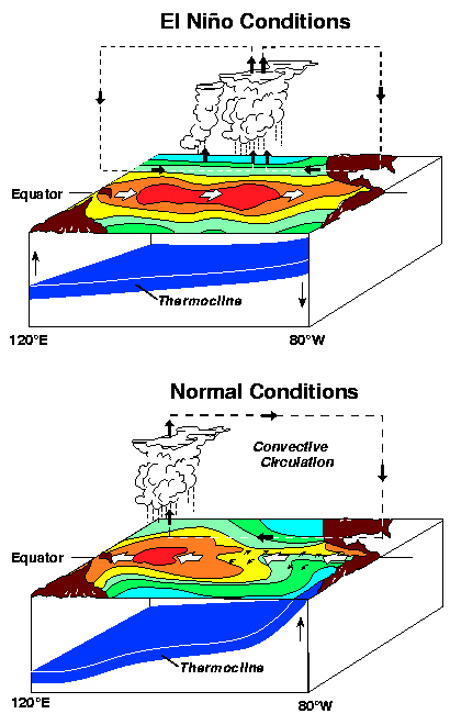 Figure showing conditions during normal and El Nino years.